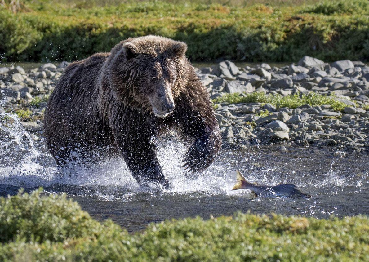 galeria-de-fotos-animais-em-acao-ursos-rio