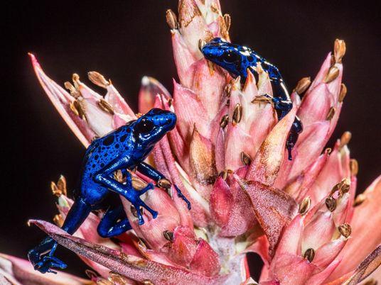 Descubra por que animais venenosos não envenenam a si mesmos