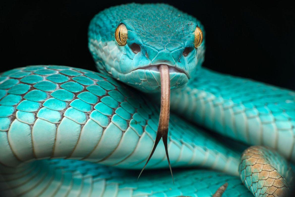 42 dos animais mais coloridos do mundo