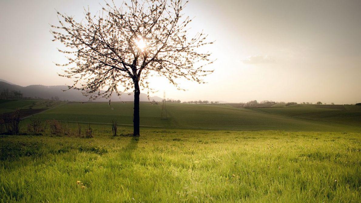 foto de árvore iluminada pelo sol