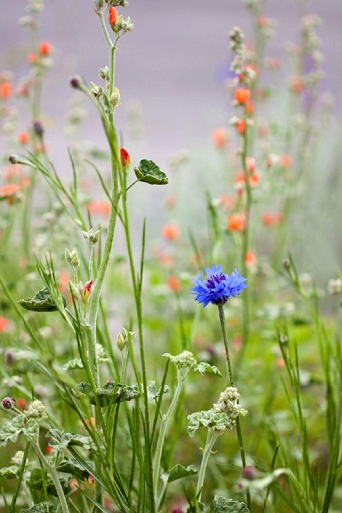 Flores selvagens na paisagem de primavera