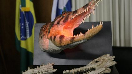 Fotos: Dinossauro, primo de crocodilo, encontrado no Brasil