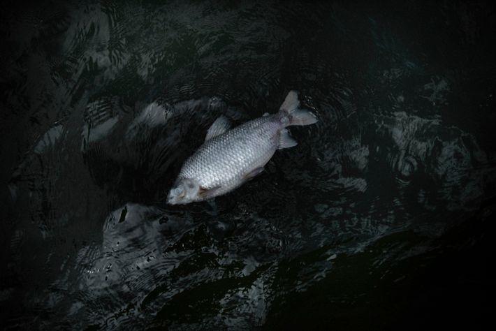 vista aérea de peixe morto boiando em represa