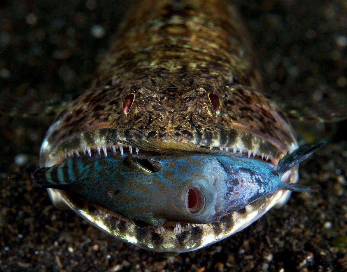 galeria-de-fotos-animais-em-acao-peixe-abissal