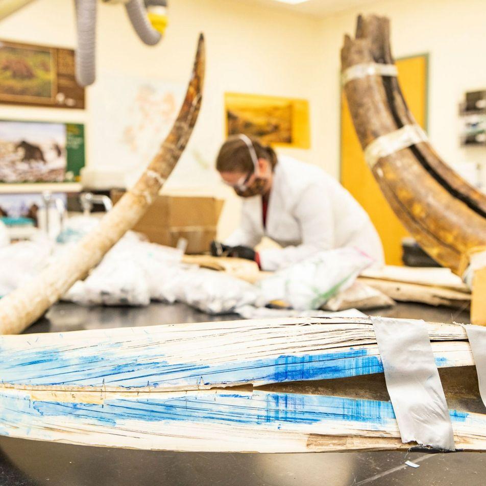 Vida de mamute da Era do Gelo reconstruída em detalhes impressionantes