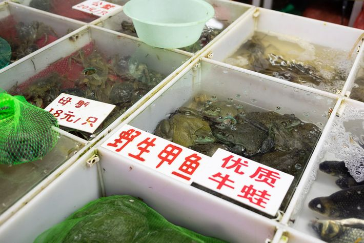 Nos mercados de frutos do mar de Xangai, encontram-se animais como sapos e moreias, exóticos para ...