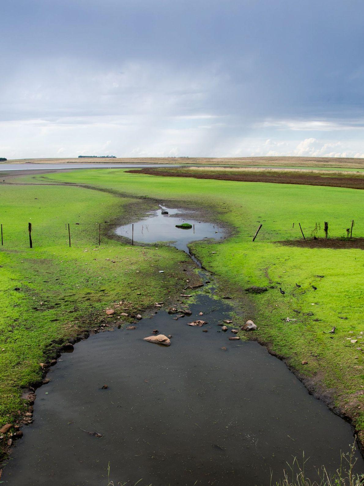 Grandes áreas alagadas, conhecidas como charcos, são importantes estuários de vida selvagem. Essas águas têm sido ...