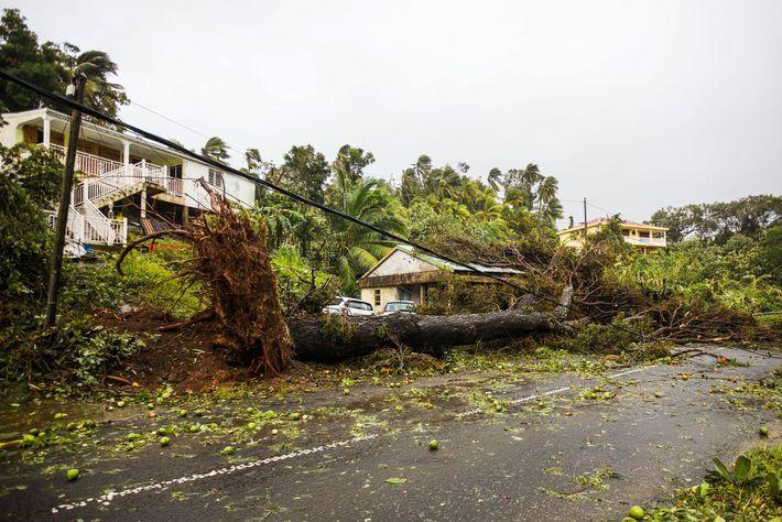 Árvore cai sobre uma pequena casa na vila de Viard - Petit Bourg, perto de Pointe-a-Pitre, ...