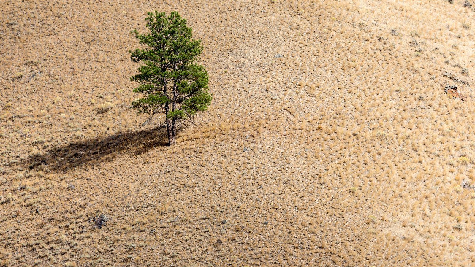Árvore solitária em encosta