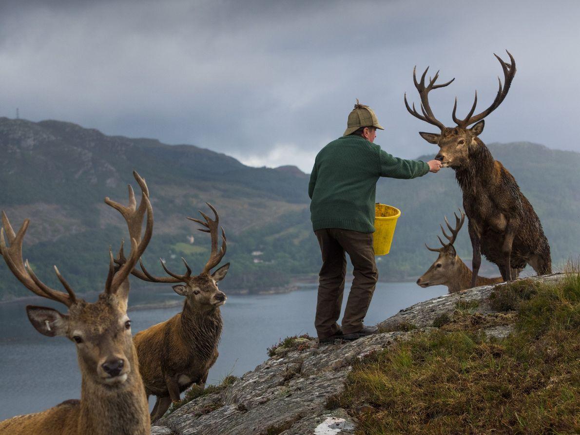 terras-altas-escocia-manejo-veados-lago-carron-floresta-de-reraig