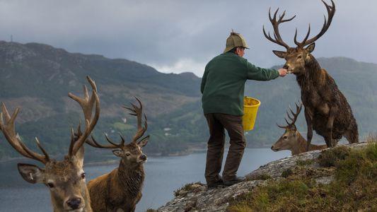 Imagens das paisagens típicas da Escócia