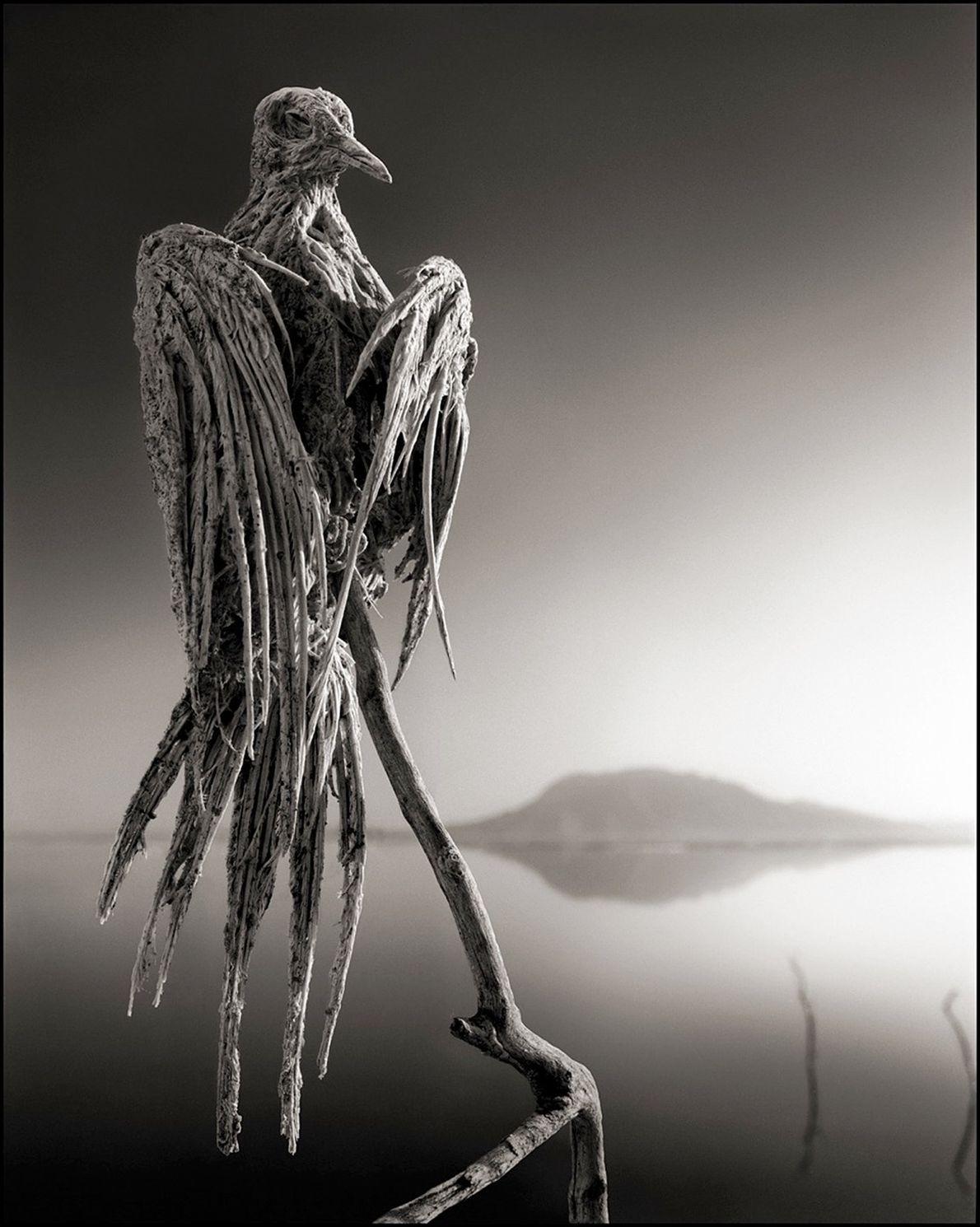 pomba silenciosa mumificada