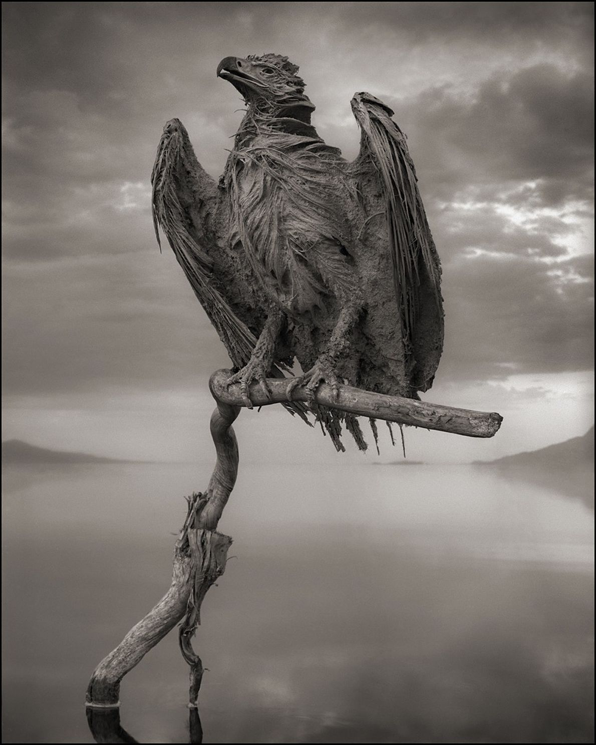 águia petrificada