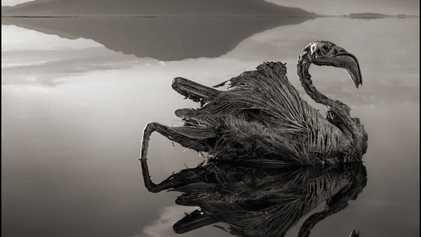 """Imagens sinistras: aves e morcegos """"calcificados"""" em lago africano"""