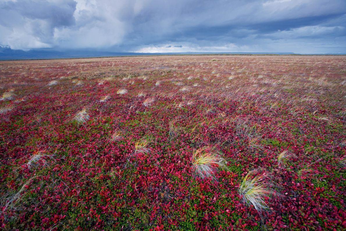 A storm billows toward the tundra near Kronotsky Volcano in Russia.