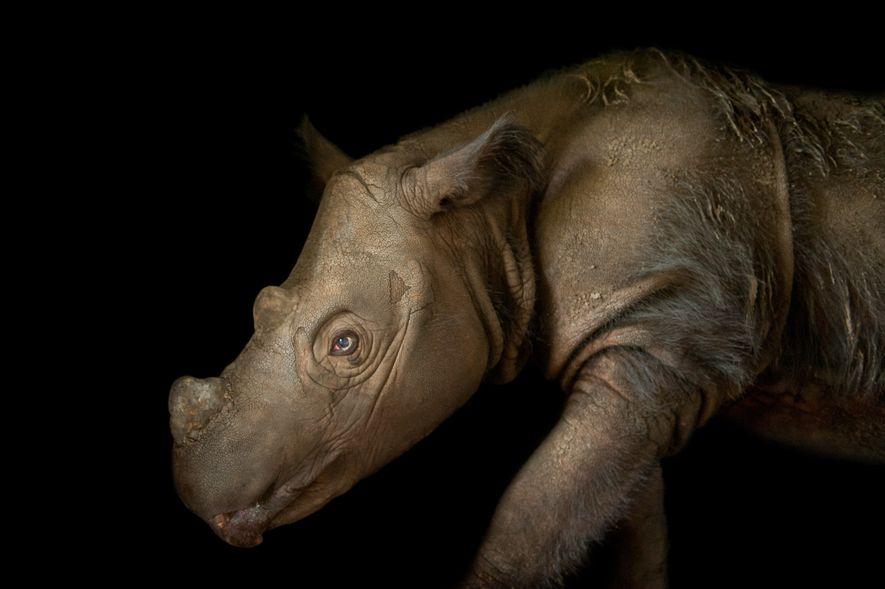10 dos animais mais raros do mundo
