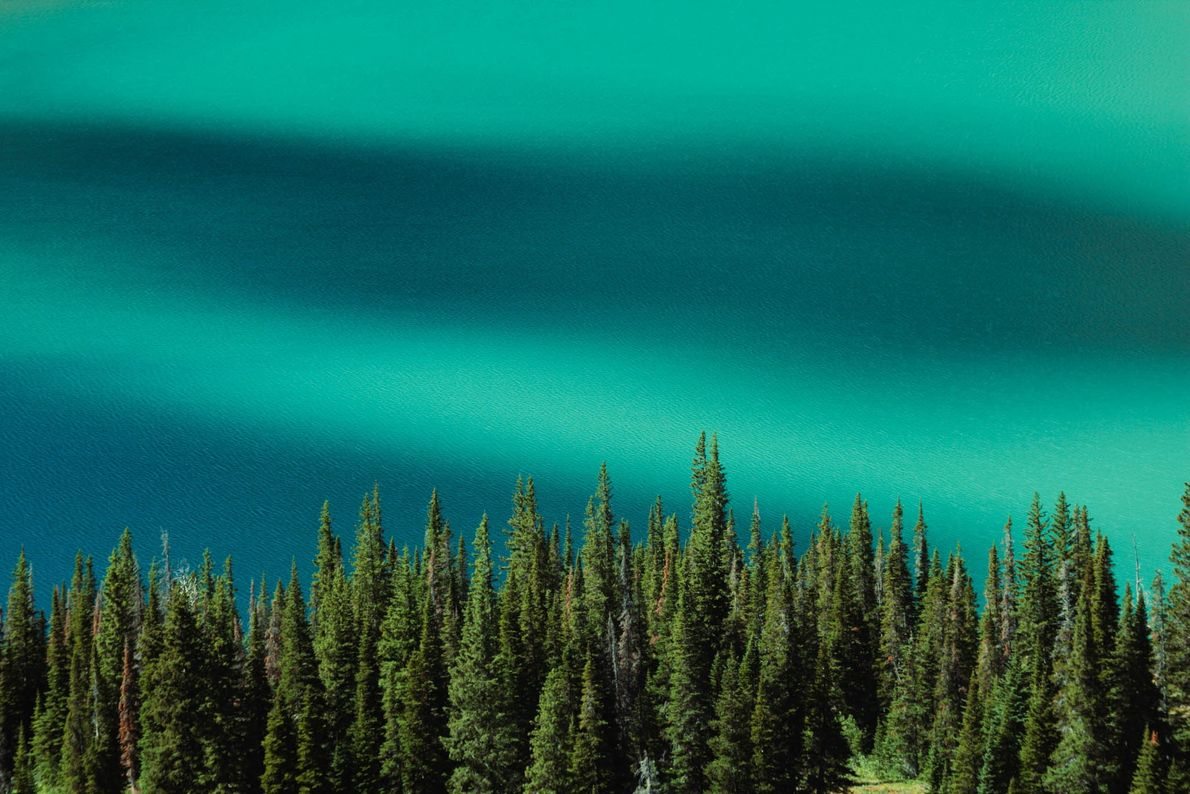 In Montana's Glacier National Park, limestone and shale particles color Grinnell Lake a milky green.