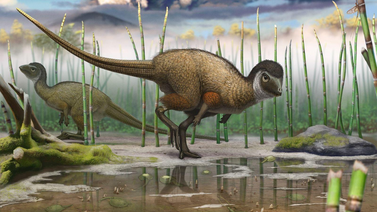 Kulindadromeus dinossauro emplumado penas