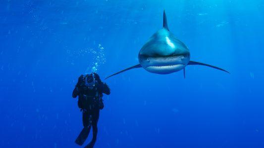 9 espécies diferentes de tubarão