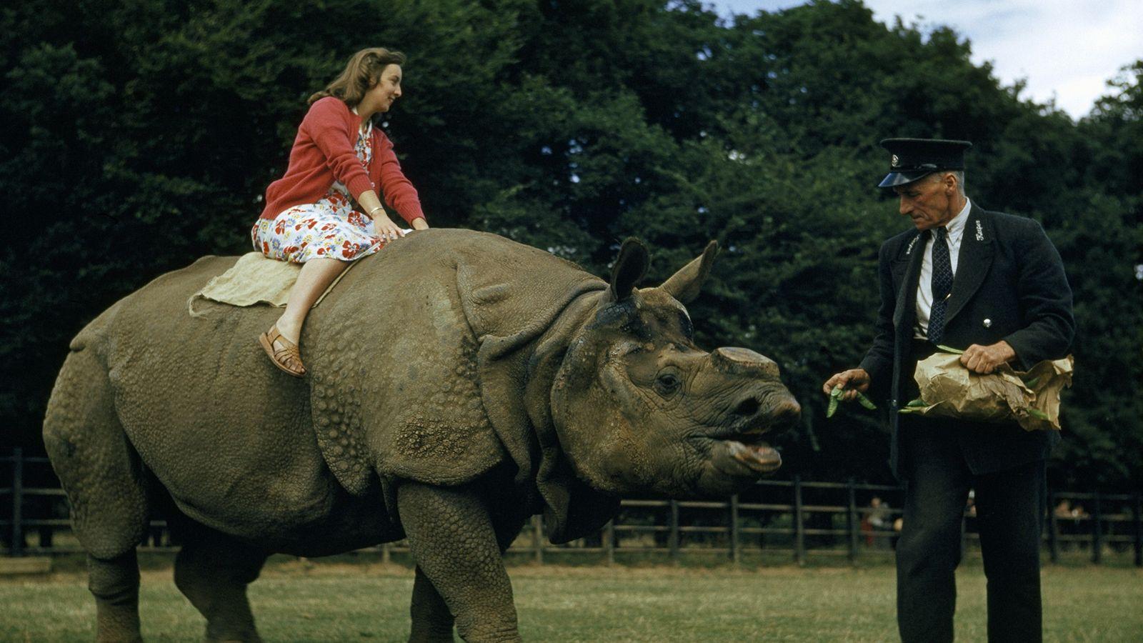 carona no rinoceronte