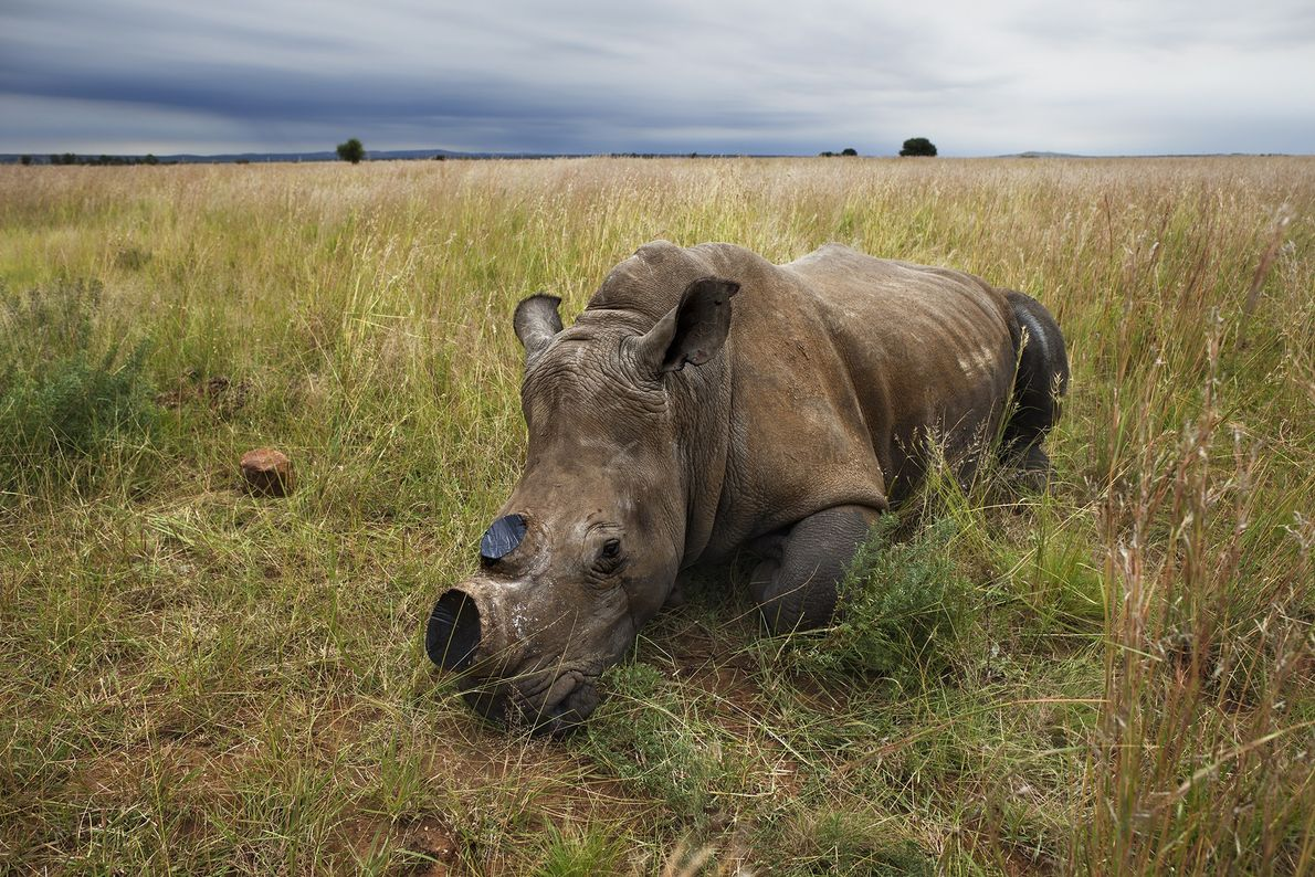 galeria-de-rinocerontes