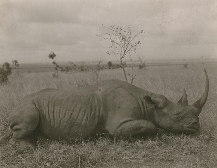 galeria-rinocerontes