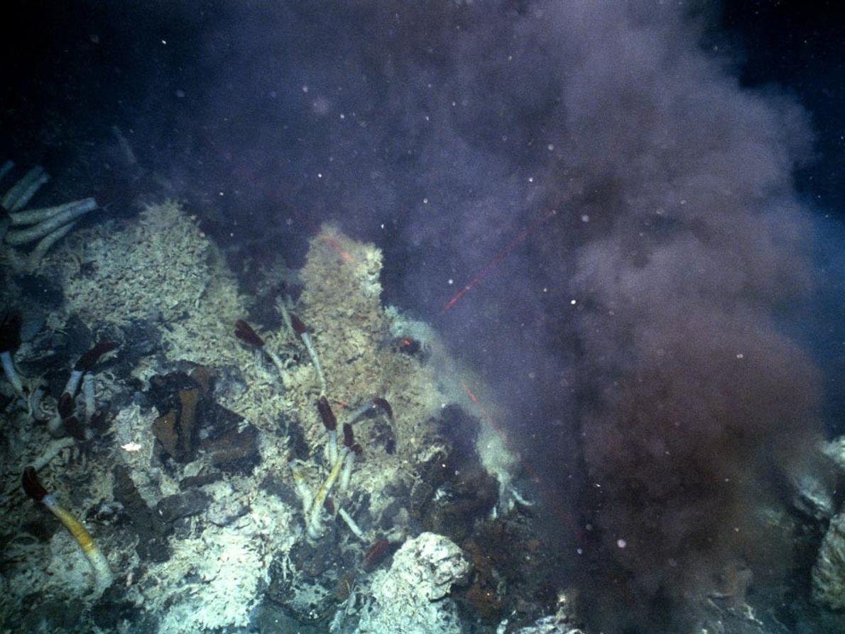 FUMEGANTES NEGROS - Uma nuvem de fluidos hidrotermais flui de uma chaminé mineral ao longo da ...