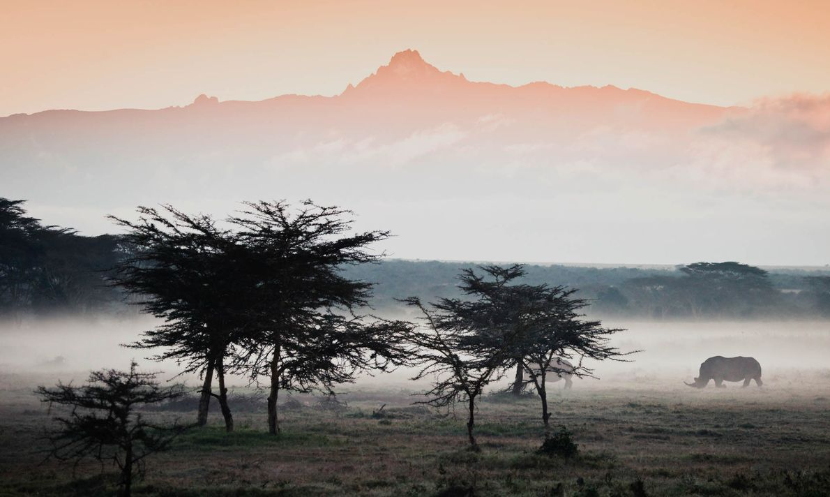 White rhinos stand in front of Mount Kenya under an early morning cover of mist.
