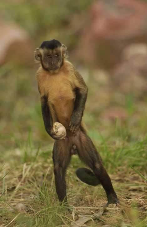 Fotos dos nossos primatas favoritos