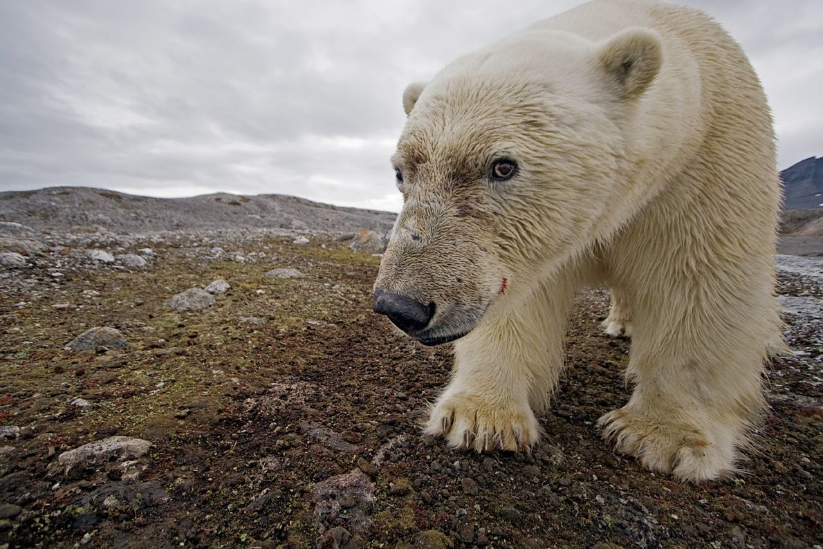urso-polar-selfie