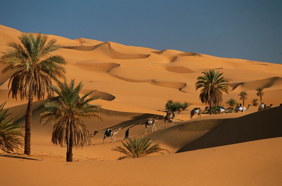 A caravan travels through the dunes and palm trees of the Sahara Desert.