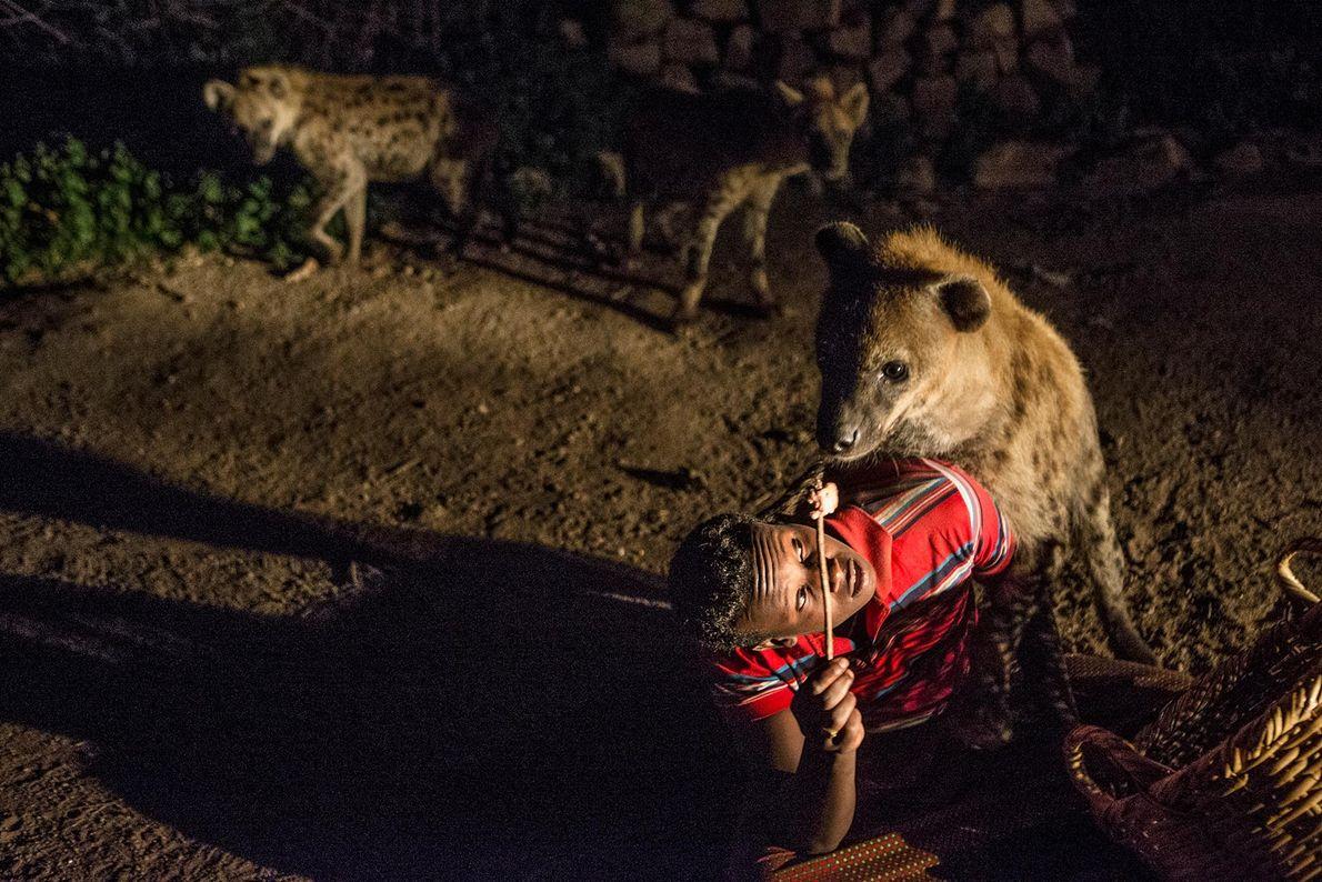 Abbas alimenta hienas em seu quintal. Além da generosa comida oferecida por habitantes, as hienas se ...