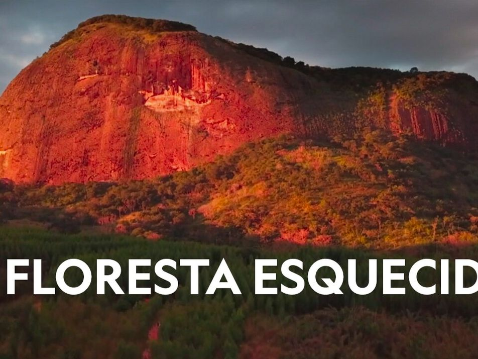 A floresta esquecida
