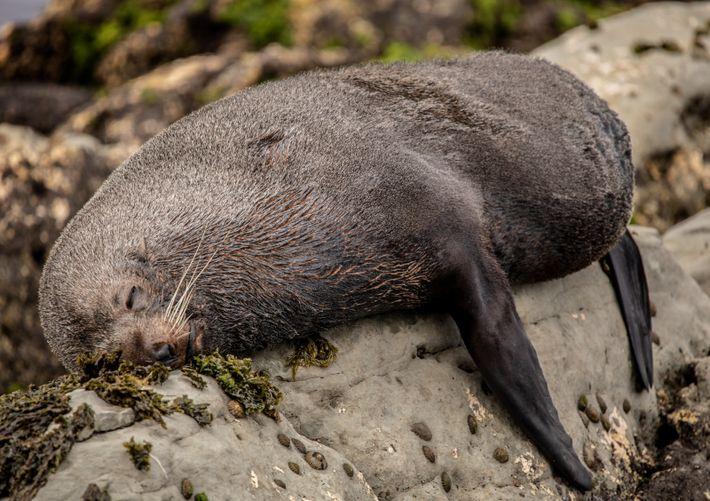 Uma foca descansa na praia
