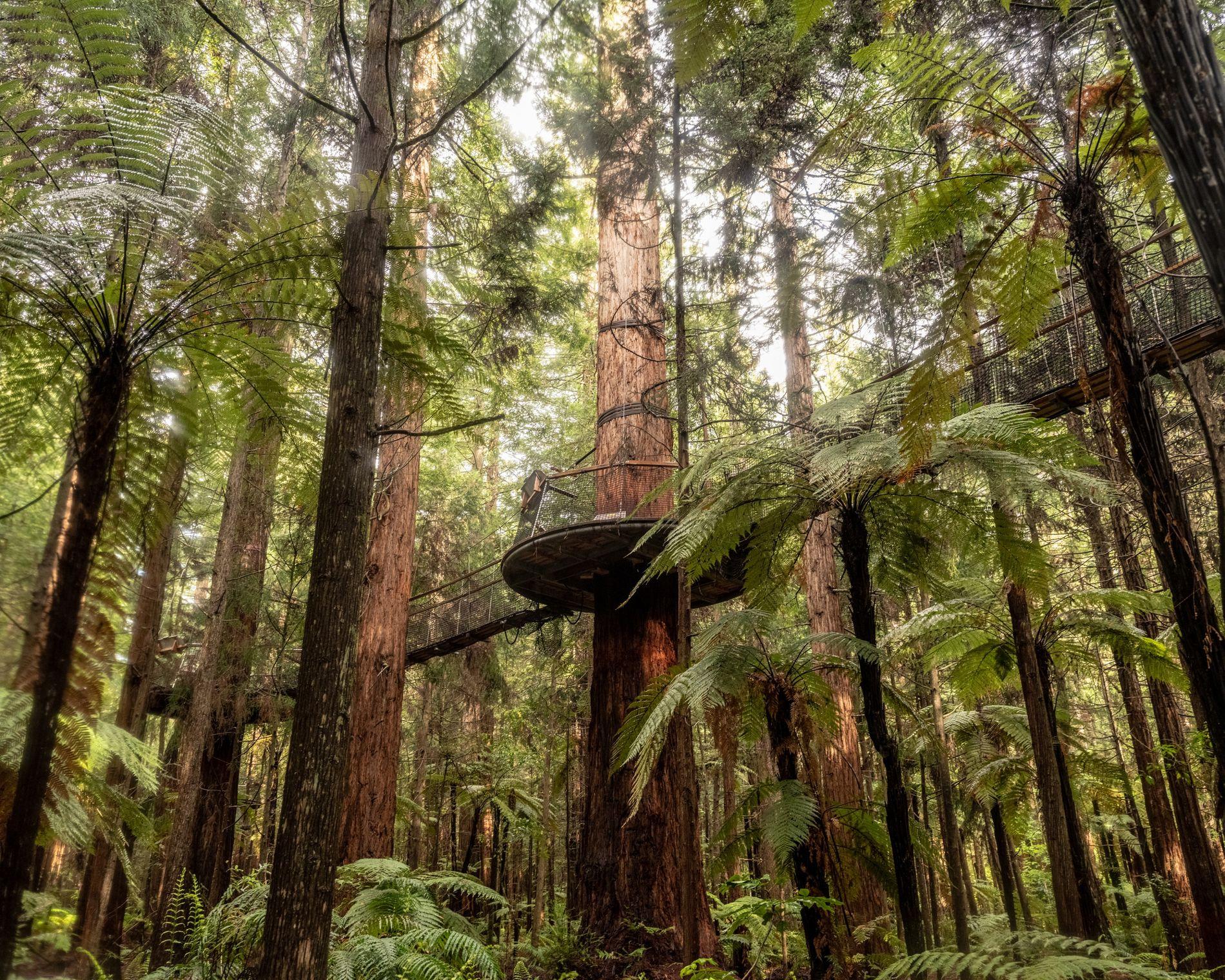 Floresta Whakareareewa