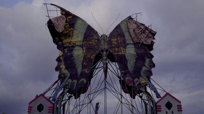 Por dentro das vidas dos comerciantes de borboletas