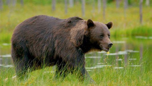 101 | Ursos