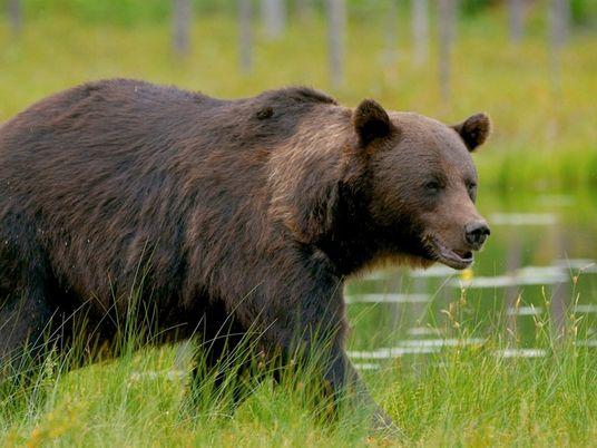 101   Ursos