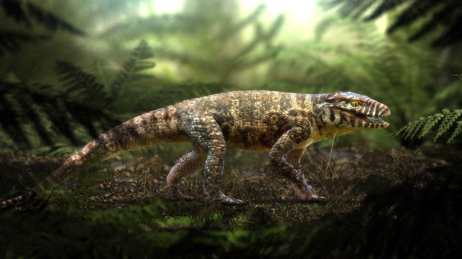 Ilustração do paleoartista Rodolfo Nogueira mostra como era o Caipirasuchus Mineirus: animal não se rastejava como ...