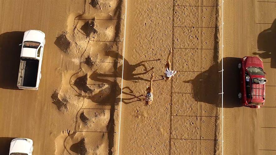 A antiga tradição da corrida de camelos vista de cima