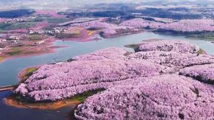 Flores de cerejeira anunciam a chegada da primavera na China