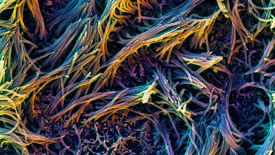 Organelas cílios em um chip-pulmão.