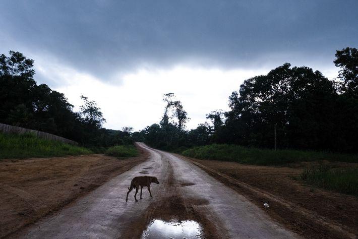 05-rondon-soosevelt-reserva-guariba-amazonia