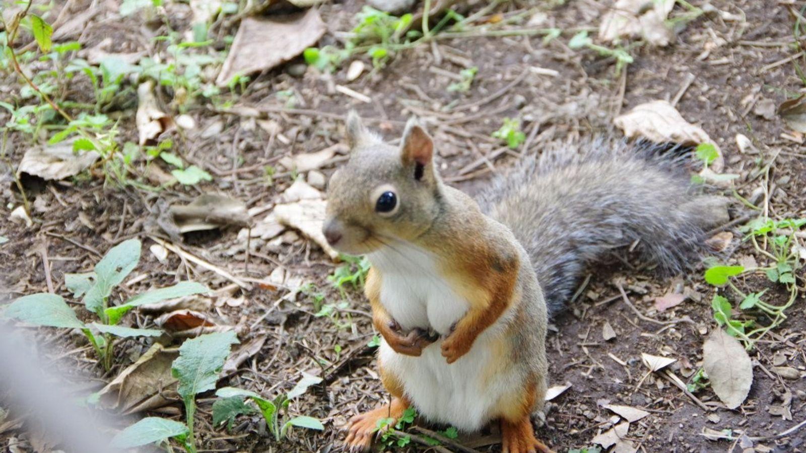 A foto deste esquilo, registrada no Japão e postada no Twitter, movimentou as redes sociais.