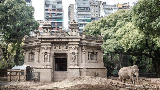 A saga de Mara em fotos: elefanta é transportada de Buenos Aires para santuário no Brasil