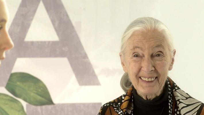 Jane: A Mãe dos Chimpanzés: Uma corajosa companheira