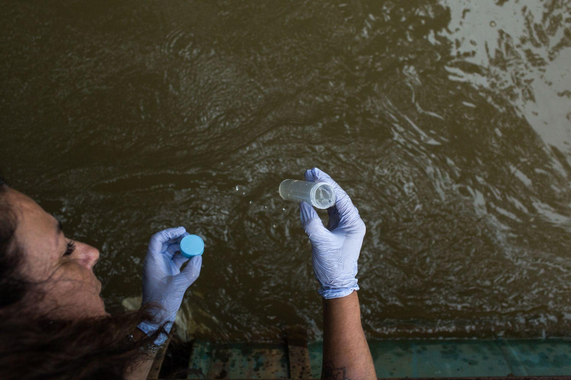 Marta Marcondes, professora da Universidade de São Caetano do Sul, recolhe amostra de água no rio ...