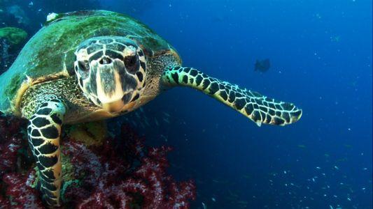 Como tartarugas-marinhas que brilham podem ajudar na cura do câncer?