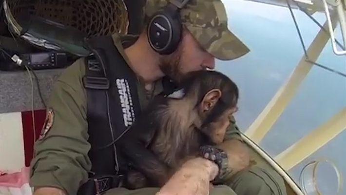 """Como este filhote de chimpanzé virou """"copiloto"""" de um voo"""