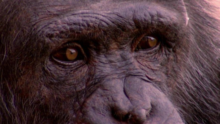 A febre amarela não é culpa dos macacos